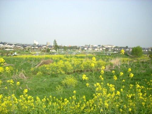 Minuma_tanbo006